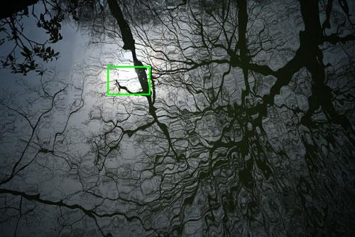 Voigtlander(フォクトレンダー) APO-LANTHAR 35mm F2 Aspherical VM 作例1拡大枠
