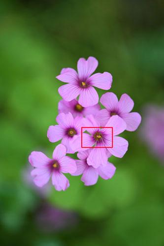 Nikon(ニコン) AF-S VR Micro-Nikkor 105mm f/2.8G IF-ED 作例1拡大枠